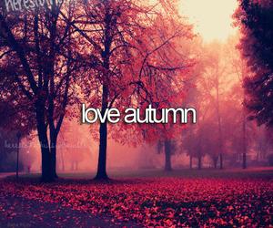 beautiful, fall, and autumn image