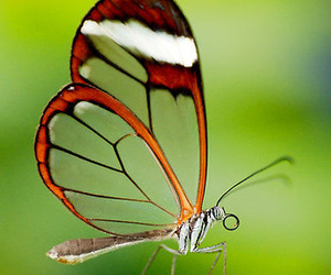 beautiful and butterfly image