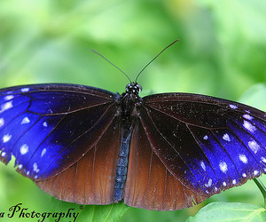 blue, butterfly, and japan image
