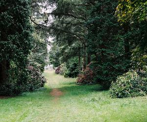 florest image