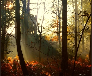 autumn, woods, and castle image