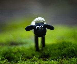 shaun and sheep image
