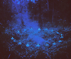 candles, forest, and blue image