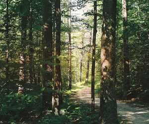 forest, vintage, and nature image