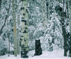 snow, wolf, and vintage image