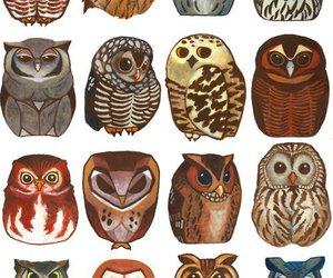 owl and art image