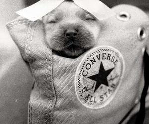 converse, puppy, and sweet image