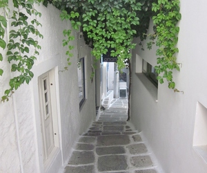 alley, foliage, and home image