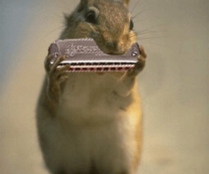 harmonica and squirrel image
