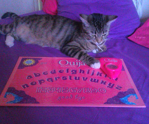 cat, pink, and ouija image
