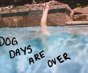 florence and the machine, dog days are over, and pool image