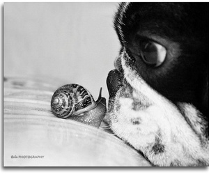snail, dog, and cute image