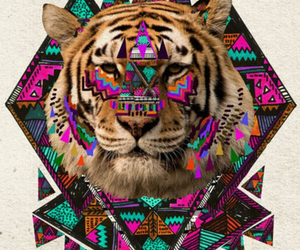tiger, hipster, and animal image