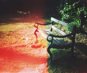 photography, bench, and park image