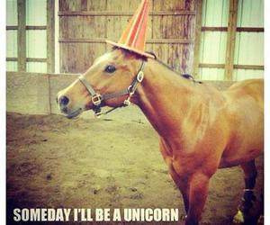 horse, unicorn, and funny image