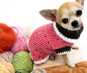 small dog, yarn, and cute image