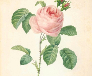 19th century, botanical art, and botany image