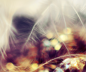 crystals, orange, and feather image