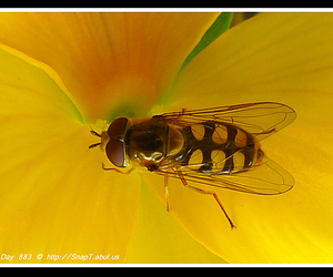 flower photography, close up photography, and hover wasp image