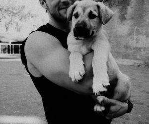 black and white, dog, and puppy image