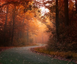autumn, street, and fall image
