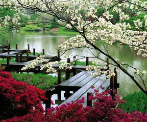 green, flowers, and river image