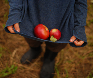 apple, autumn, and forest image