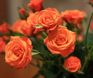 flowers, rose, and orange image