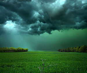 beautiful, nature, and green image