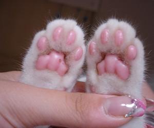 cat, kitty, and nail image
