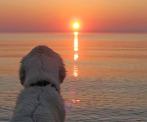 dog and sunset image
