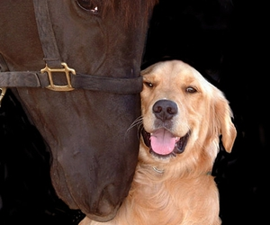 dog, horse, and animal image