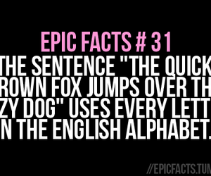 fact, funny, and fox image