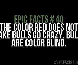 bull, epic fail, and fact image