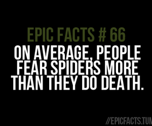 fact, funny, and spiders image