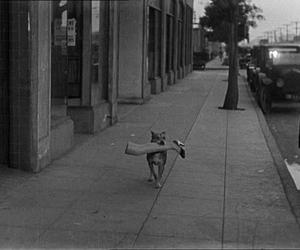 dog and leg image