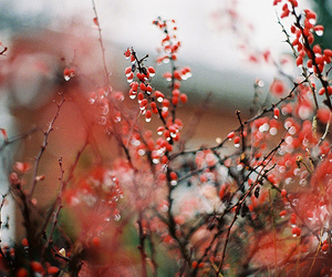 red, nature, and photography image