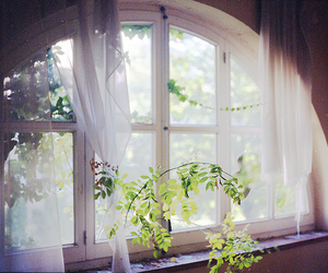 window, black and white, and flowers image