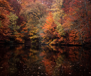 autumn, trees, and fall image
