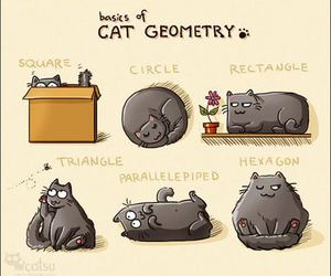 cat and geometry image