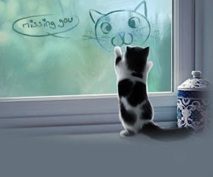 cat and miss you image