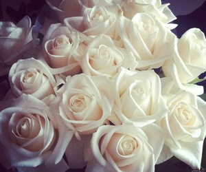 rose, flowers, and white image