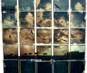 sky, bird, and photography image