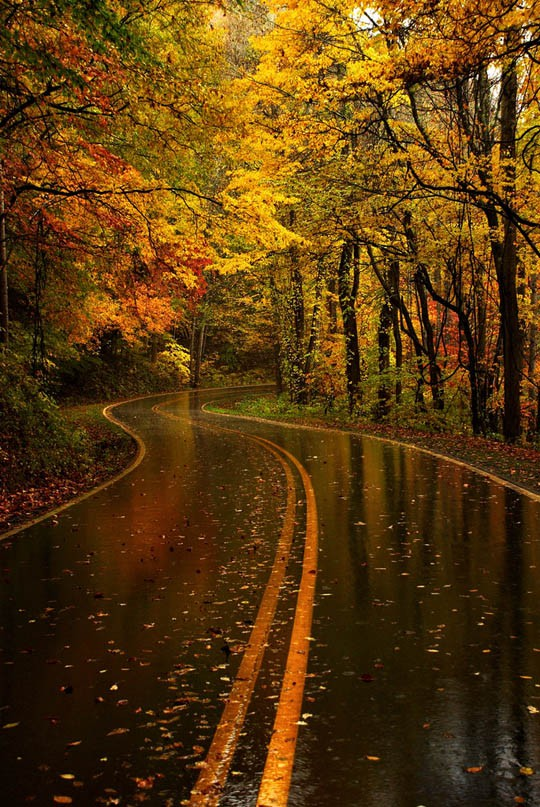 Photography Photography Beautiful Rain Drenched Autumn Road I Can Almost Smell It