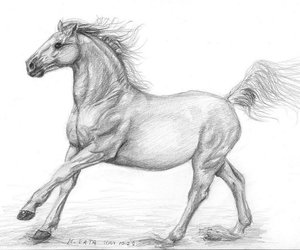 drawing, horse, and skecth image
