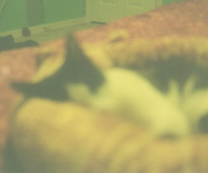 cat, film, and vintage image