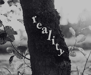 reality and tree image