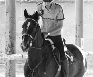 horse, horseriding, and sport image
