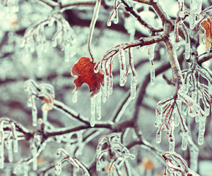 ice and winter image