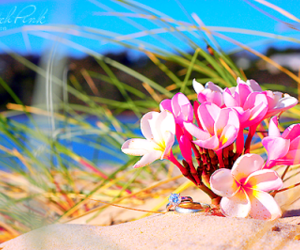 beach, flowers, and plumeria image